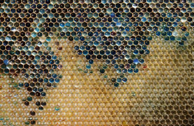 Honey-pixanews.com-3-680x441