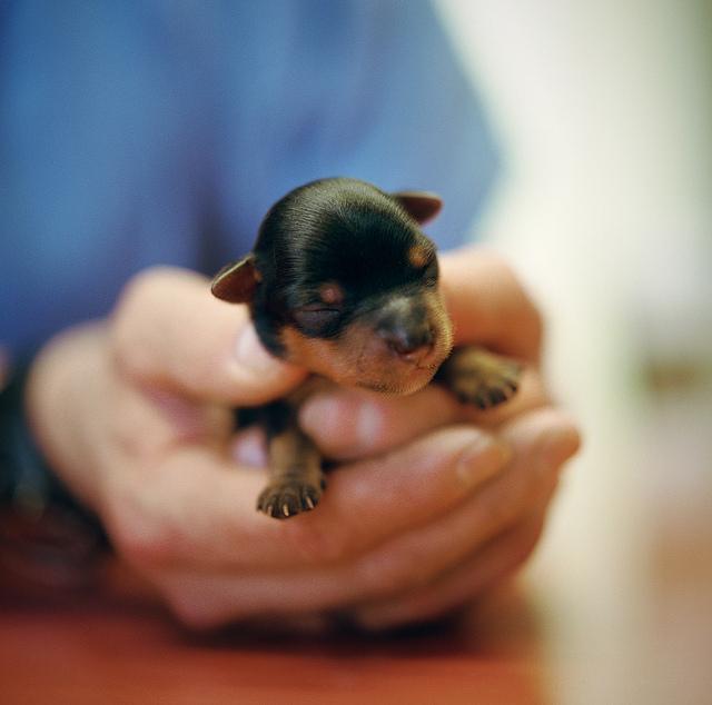 Cute-Animal-2