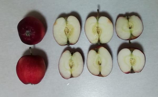 Яблоки не с косточками, а с семенами?