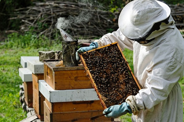 Секс с пчеловодом видео