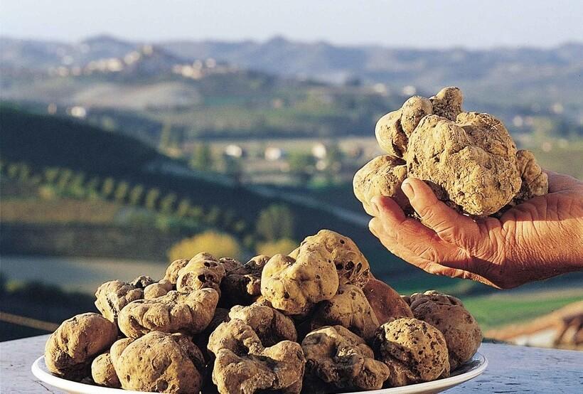 Стоимость некоторых видов трюфеля доходит до 50 000 долларов за килограмм