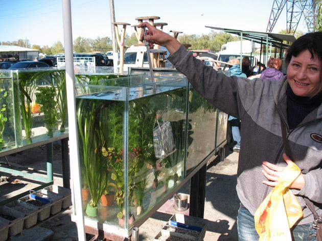 Торговля аквариумными растениями. Птичий рынок в Харькове или харьковская «Птичка»