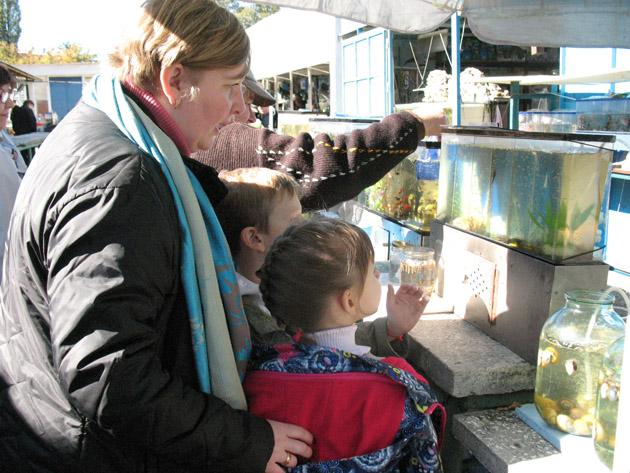 Начинающие аквариумисты. Птичий рынок в Харькове или харьковская «Птичка»