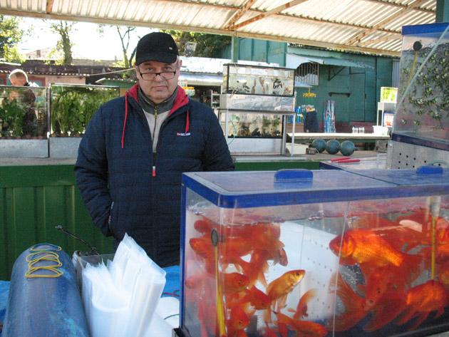 Аквариумист. Птичий рынок в Харькове или харьковская «Птичка»