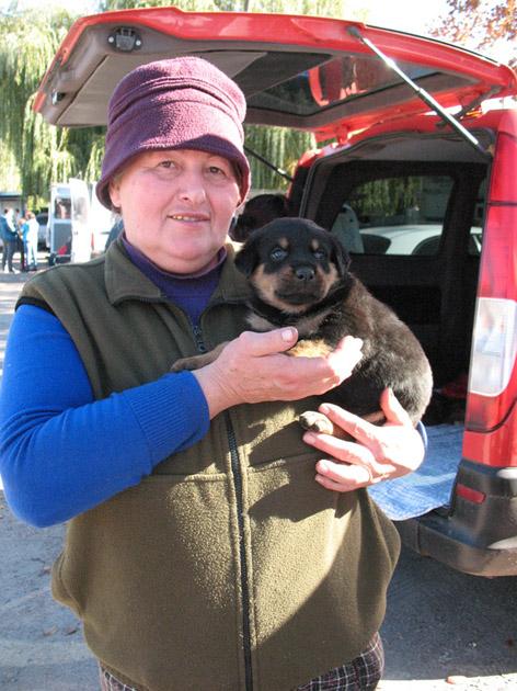 Щенок ротвейлера на руках у хозяйки. Птичий рынок в Харькове или харьковская «Птичка»