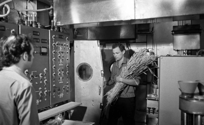 Участники эксперимента «БИОС-3» с собранным урожаем пшеницы