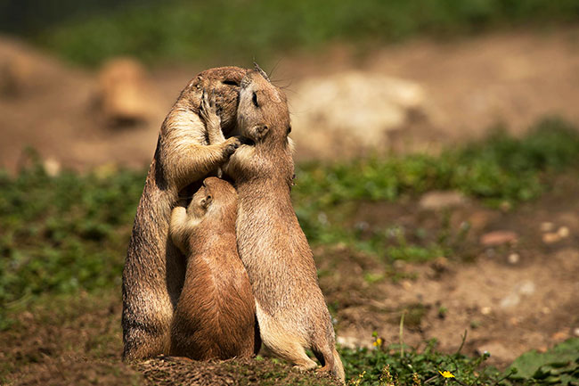 animals-kissing-2