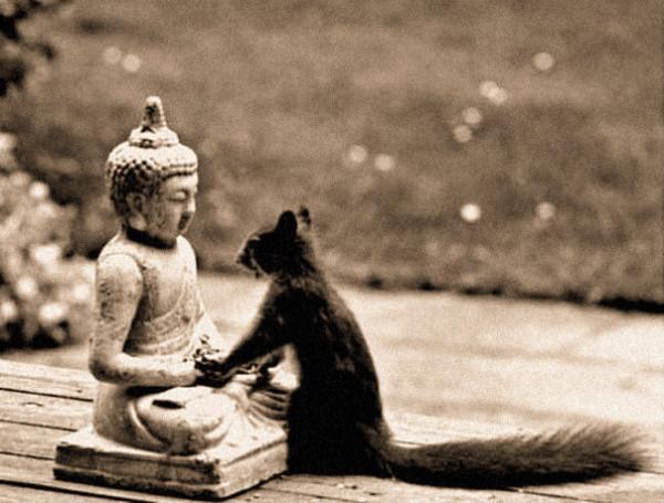 Будда и белочка