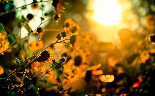 [gotowall.com]20121119_193412_2444