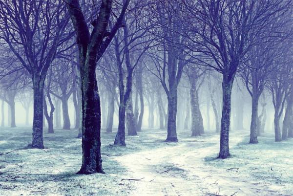 art-зима-лес-деревья-353780