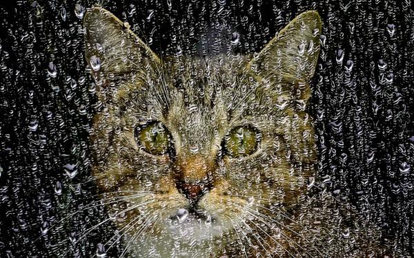 котэ-дождь-Природа-красивые-картинки-722424