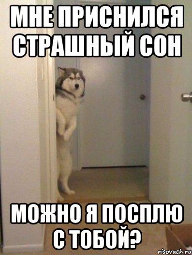 mne-prisnilsya-strashnyy-son-mozhno_20073273_orig_
