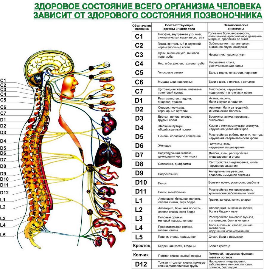 vliyanie-gaymorita-na-podvizhnost-spermatozoidov