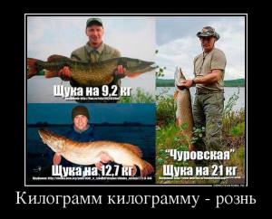 74883449_kilogramm-kilogrammu-rozn