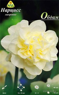 Narciss-mahroviy-Obdam-_1053964_cec11bf1