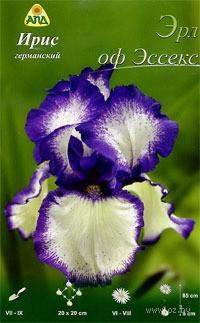 Iris-germanskiy-Erl-of-Esseks-_1065143_047c965d