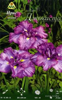 Iris-ensata-Djokasta-_1065163_483ff228