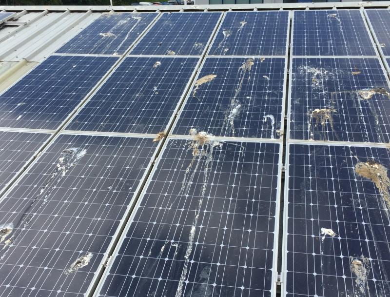 Солнечные батареи обосранные птицами