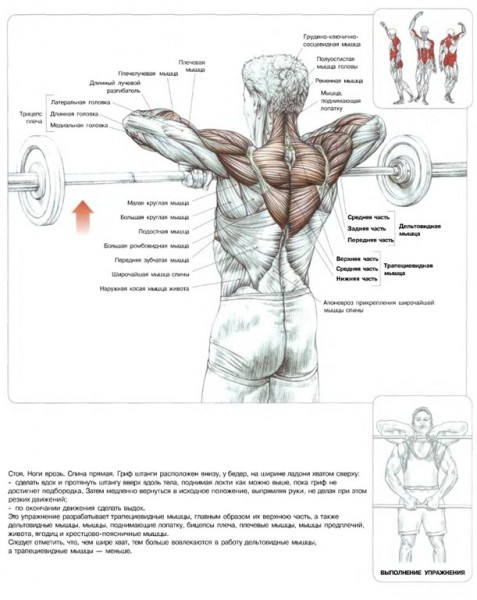 Упражнения для средней части спины в домашних условиях