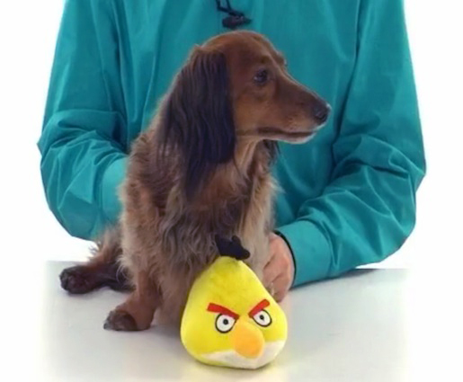 Angry Birds Plush Pet Toy
