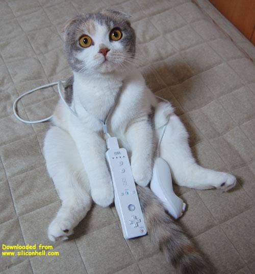 wii kitty