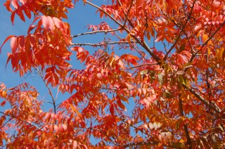 Glowing red tree