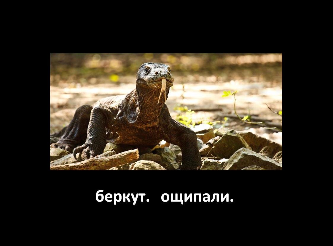 Berkut1_oschpali