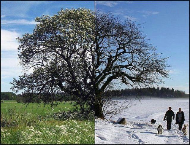 fotografii-odnogo-i-togo-zhe-mesta-zimoj-i-letom15