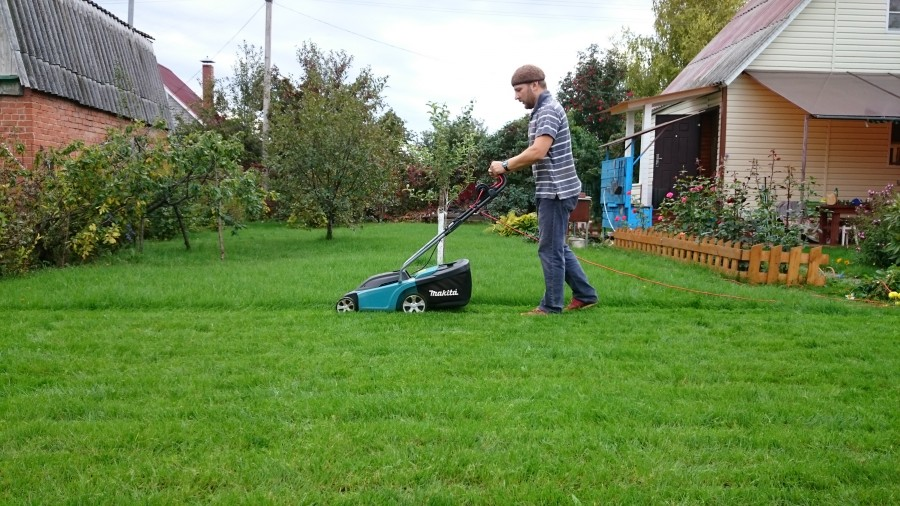 Как сделать хороший газон. Лайфхак для начинающих аграриев