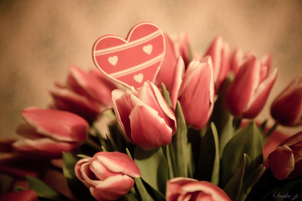 Тюльпаны2_февраля-14,-2014