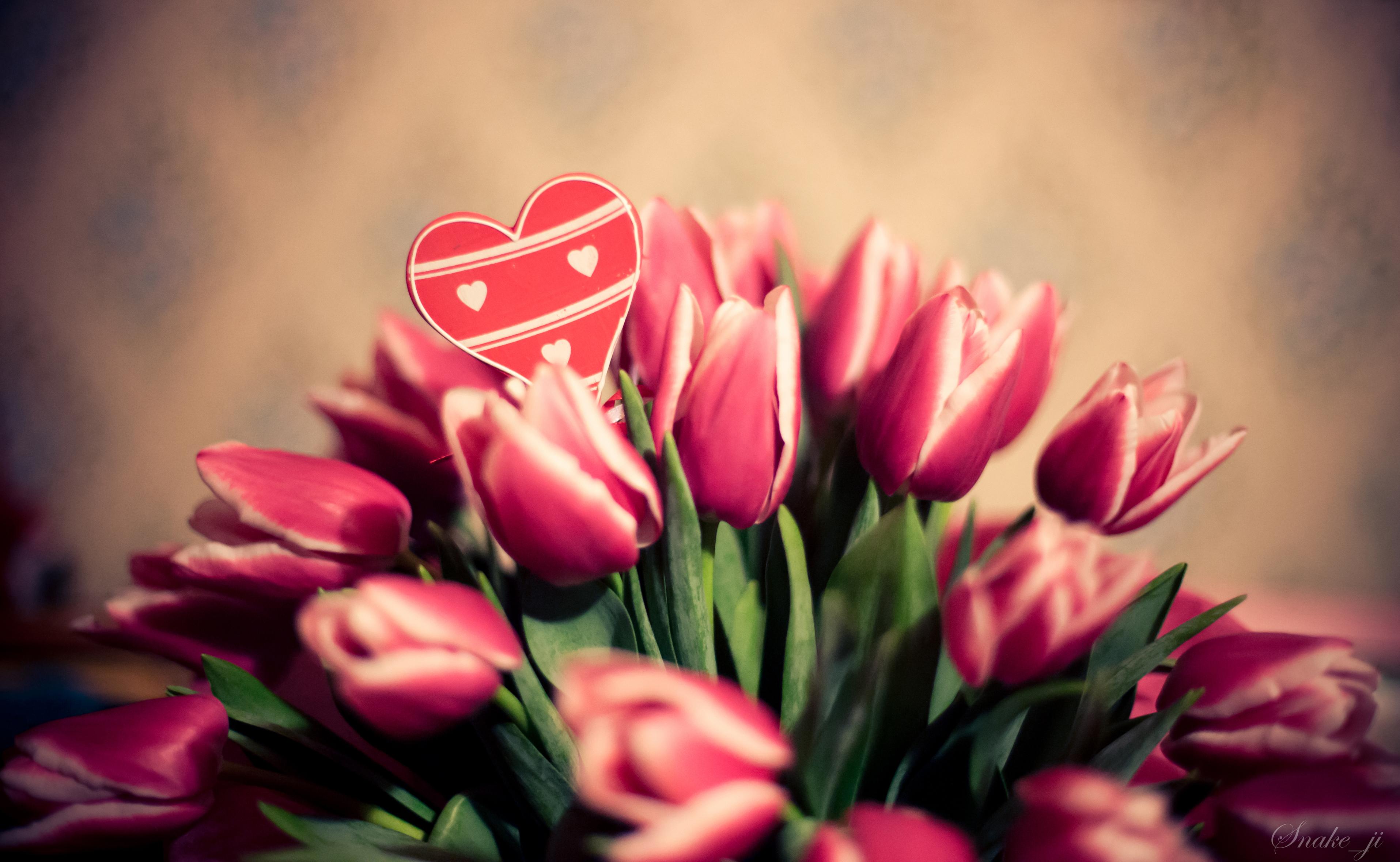 Тюльпаны7_февраля-14,-2014