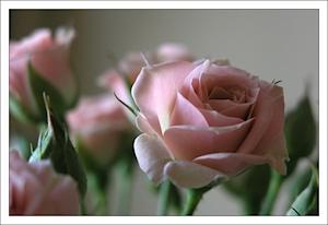 цветочег