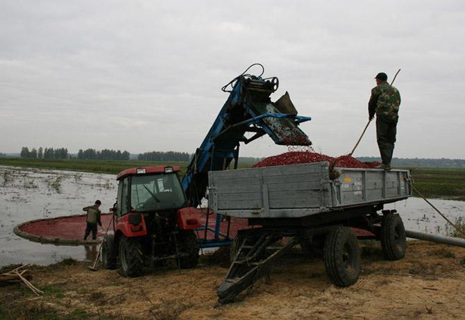 Транспортер в беларуси тележки с рольгангом