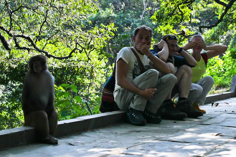 Священные обезьянки