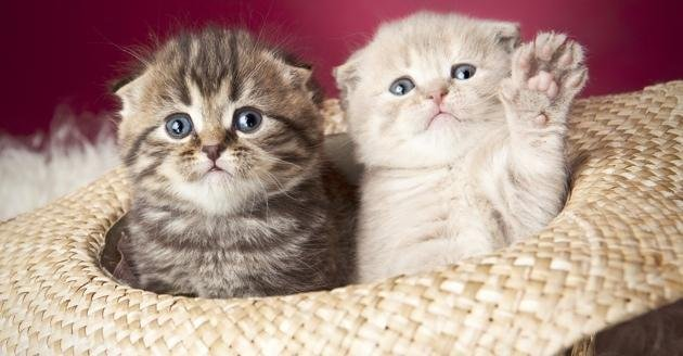 fva-630-kittens-cat-hat-adorable-cute-via-shutterstock-630w