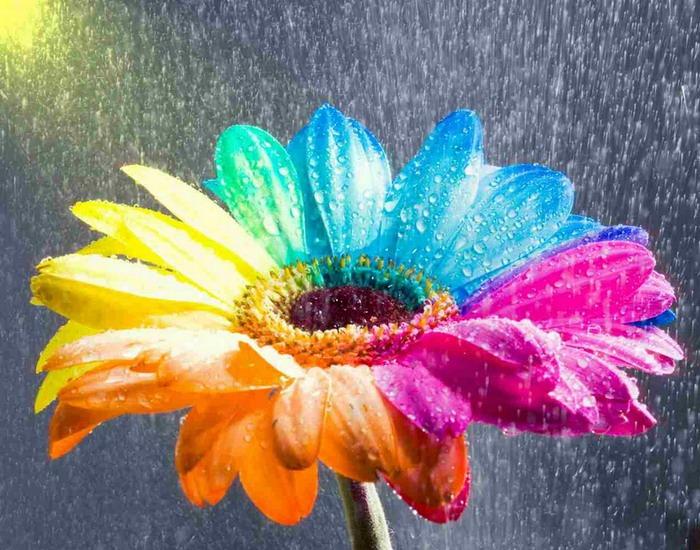 mir-rasteniy-i-cvetov