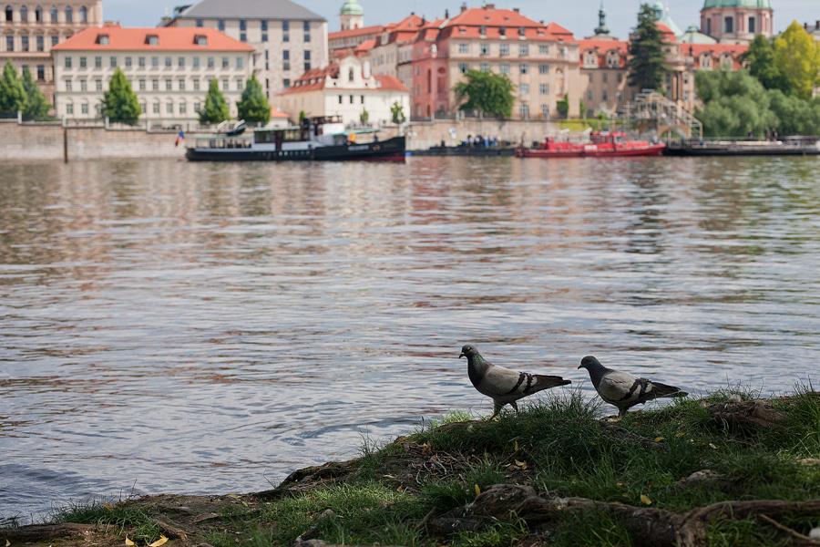 Prague_in_may_038