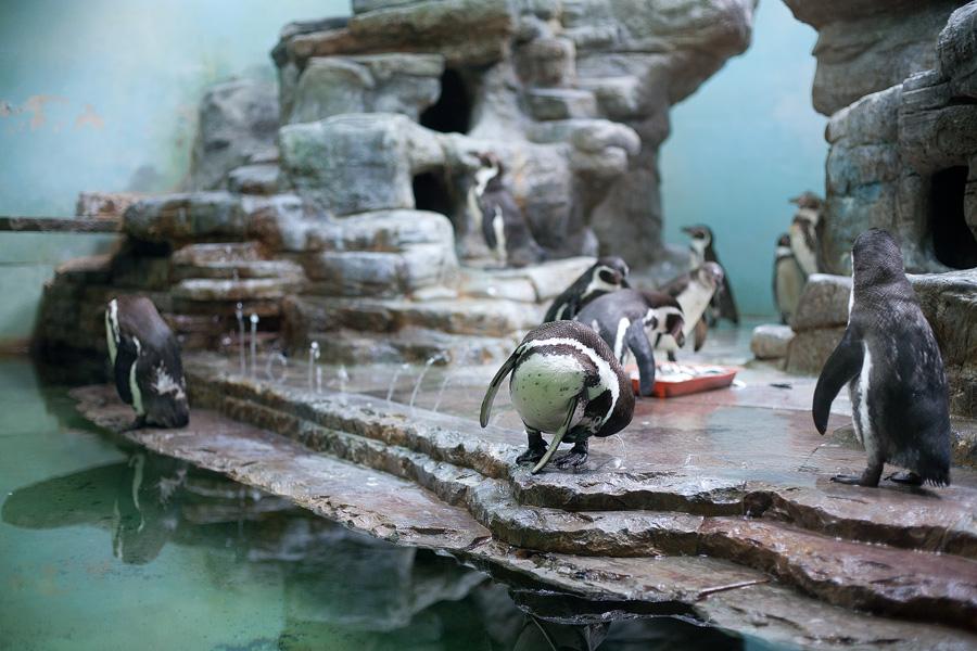 zoo-prague_12