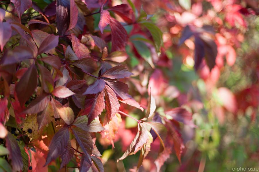 autumn2015-5.jpg