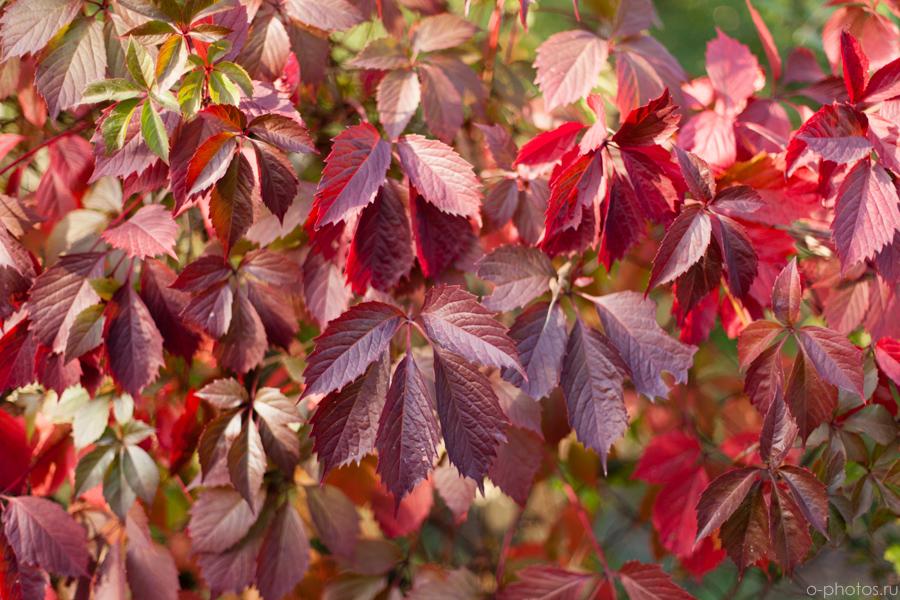 autumn2015-13.jpg
