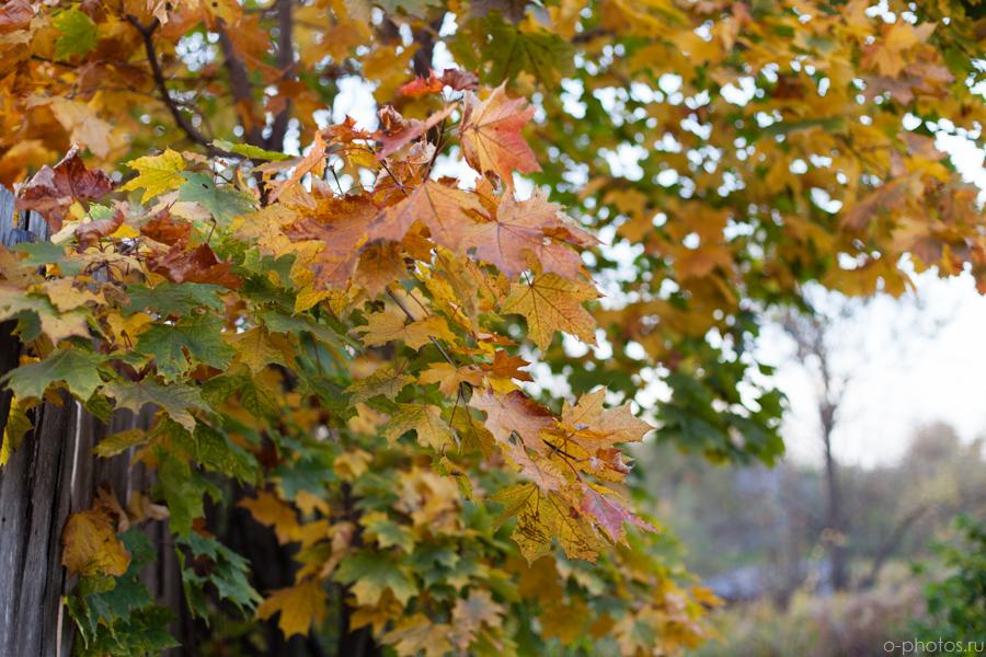autumn2015-47.jpg