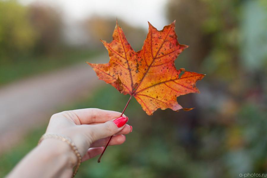 autumn2015-50.jpg