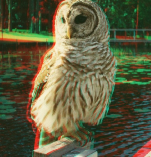 anaglyph-owl1