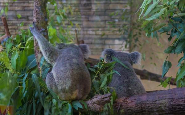 zoopark-v-chiang-mae-25