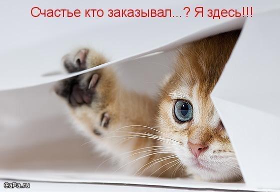 YoVxksKDbnM