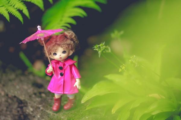 пукифи флора
