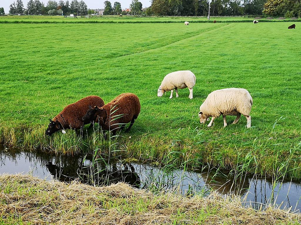 Овцеводство. Популярный краткий курс.