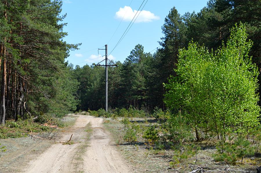 Дорога в Стойлы