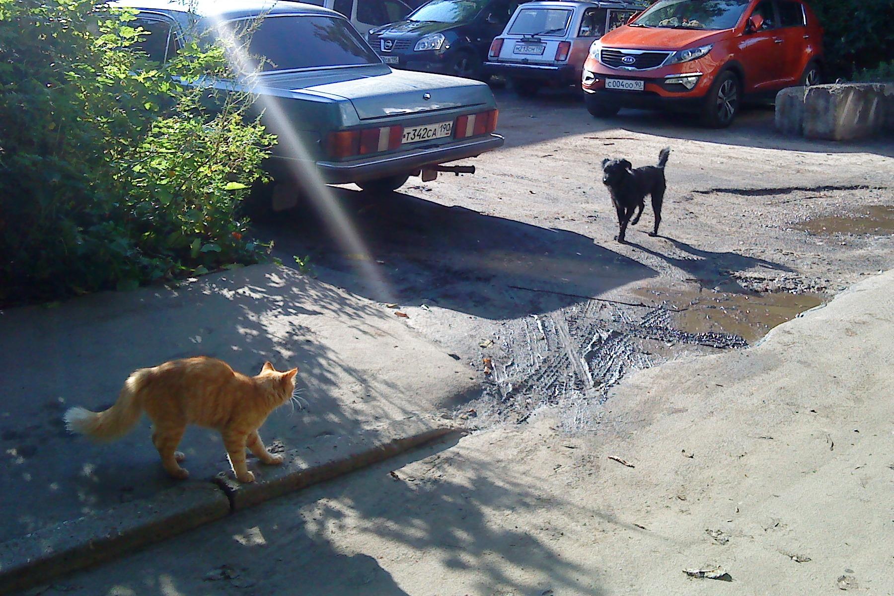 sola-menta, лето, август, 2012, кошка, собака
