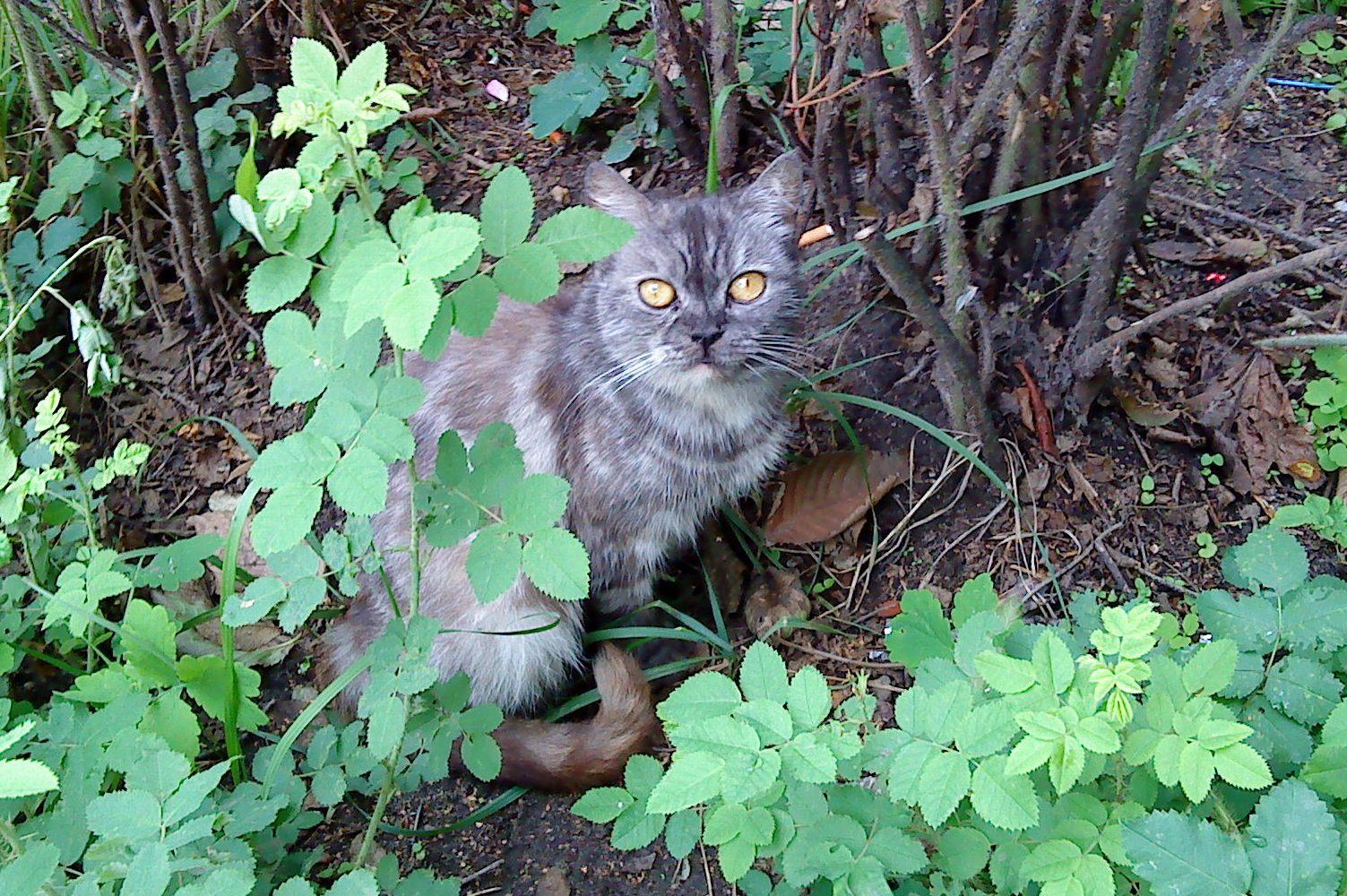 sola-menta, кот